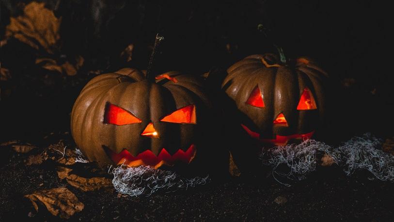 Halloween pumpkins glowing in a field